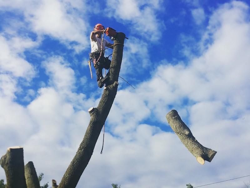 climber-performing-tree-removal
