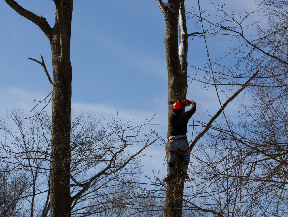 skilled-climber-cutting-down-tree