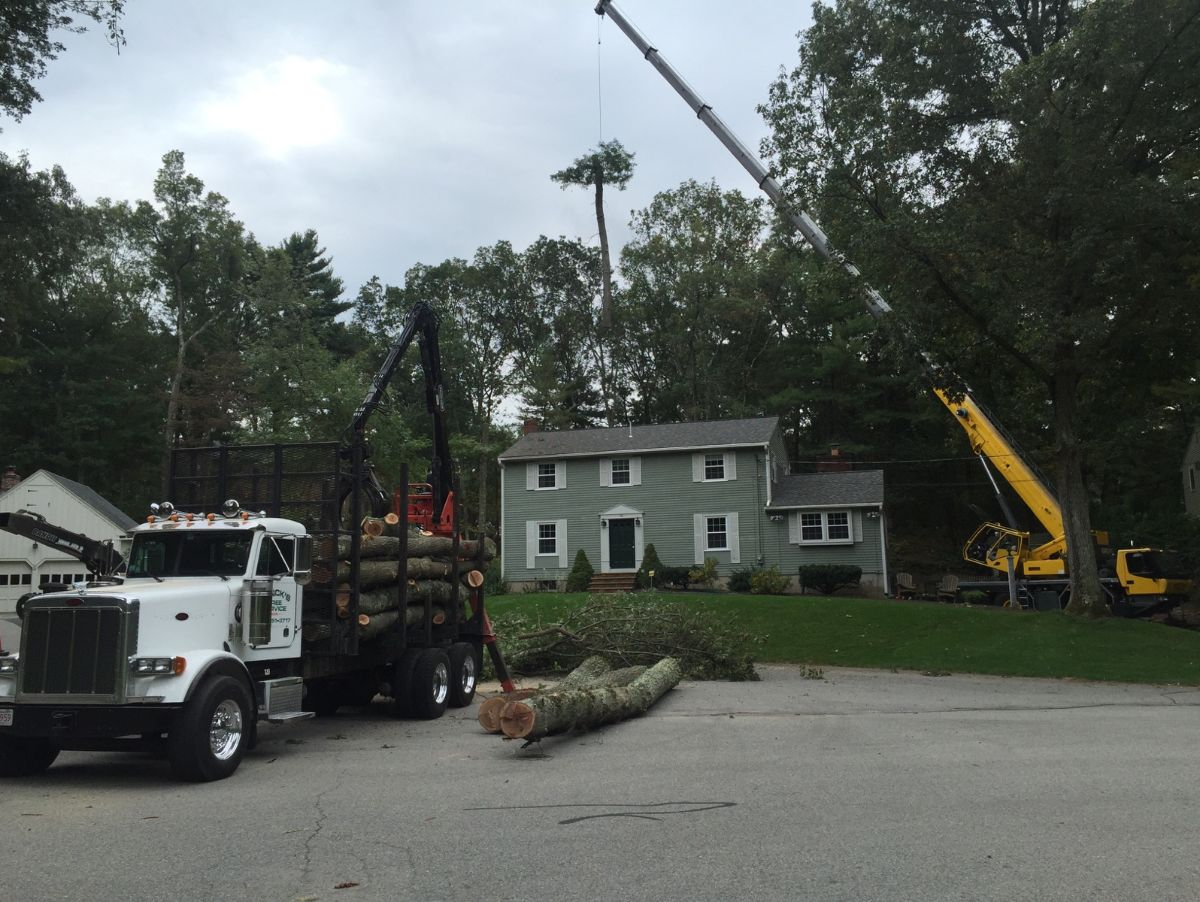 tree-removal-with-crane-tewksbury